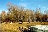 Ивановские пруды. Фото с сайта: www.rhs.ru